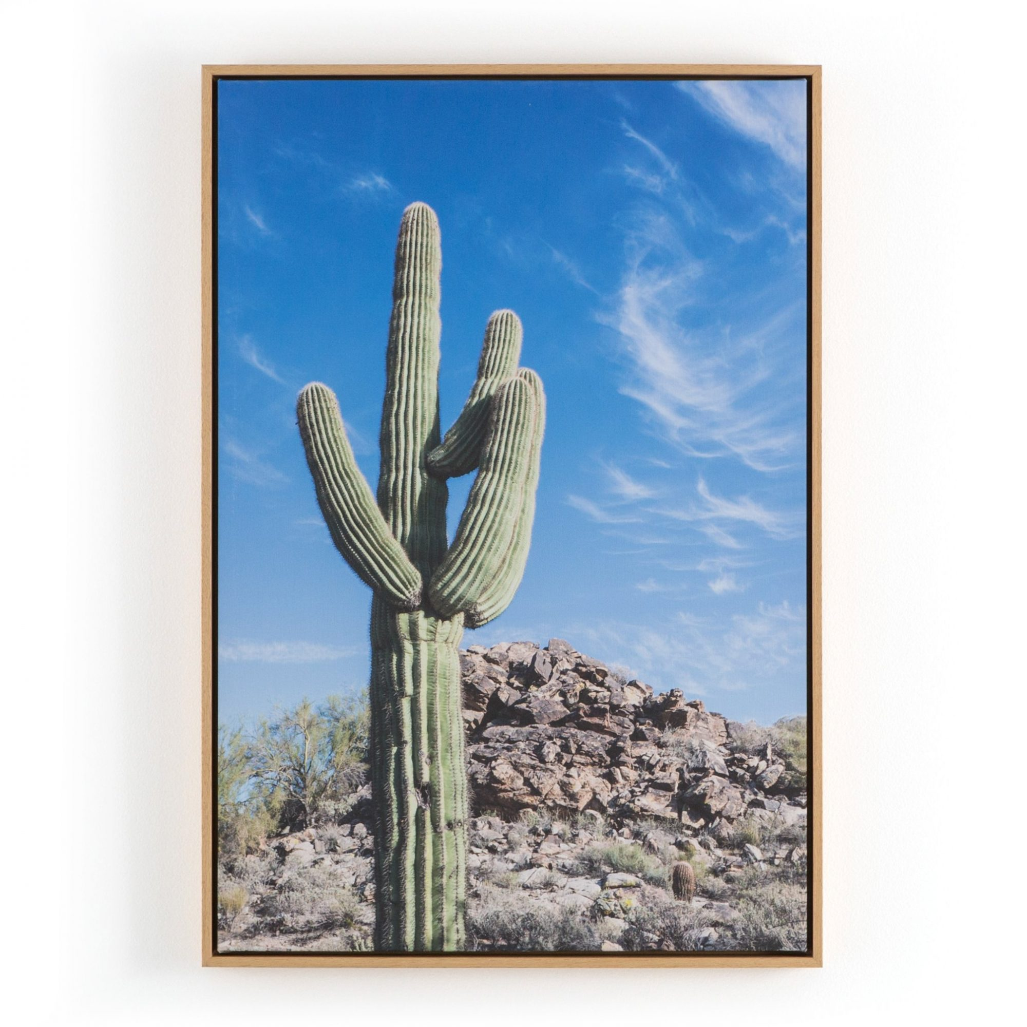 Cactus By Joseph Gareri Wall Art